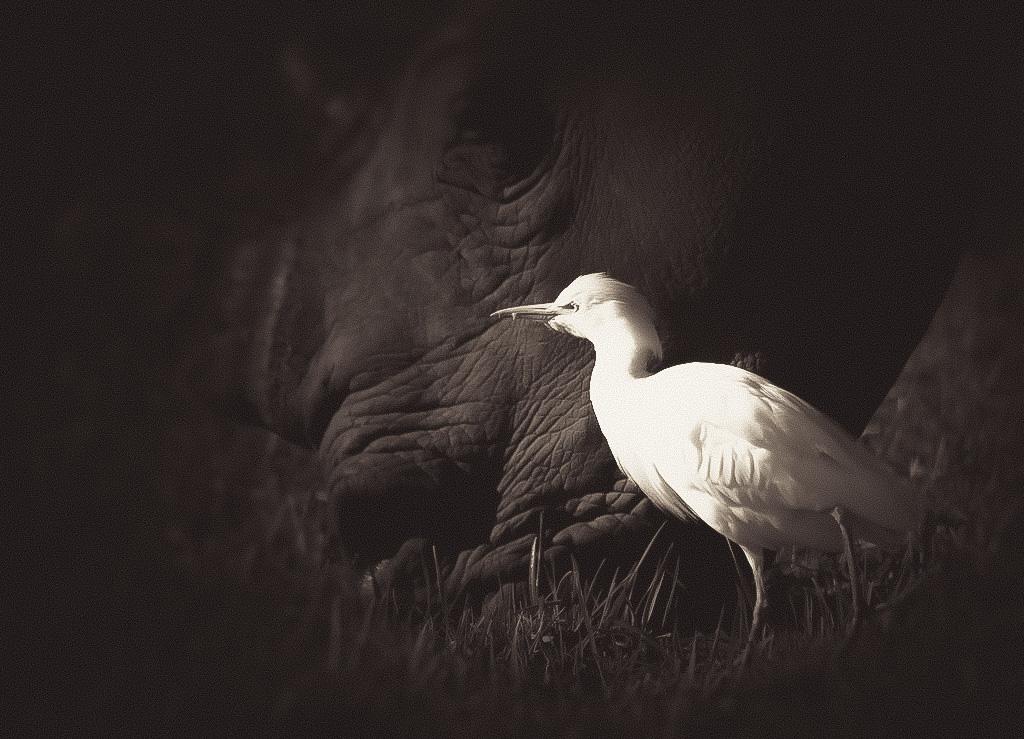 wildlife_mono-02