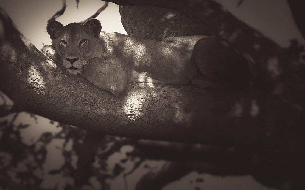 wildlife_mono-04