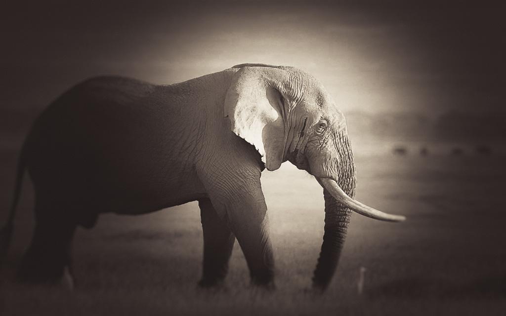 wildlife_mono-06